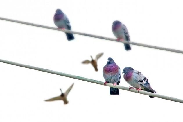 palomas en puente de murcia